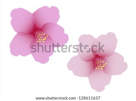 The cherry blossom flower vector - stock vector