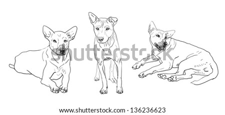 The dog in 3 poses. - stock vector