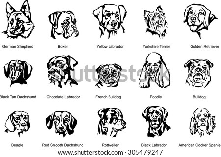 The face of a dog, breed dog, vector the image of a dog face, dog, portrait. Black silhouette of dog. Vector illustration.  - stock vector