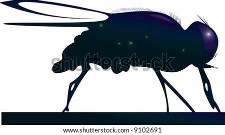 The fly. A vector illustration. - stock vector