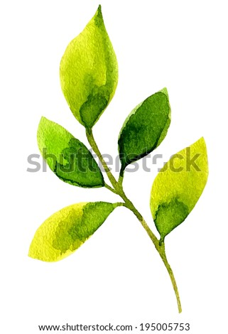 The green leaves. Watercolor. - stock vector