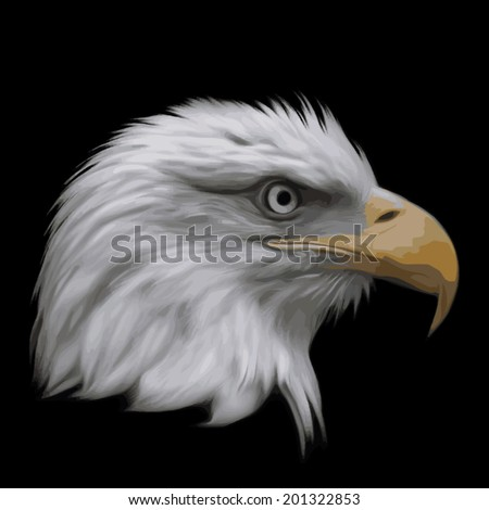 The head of a bald eagle, haliaeetus leucocephalus, isolated on black background. Side face portrait of American eagle, US national character, very beautiful bird with proud expression. Vector image. - stock vector