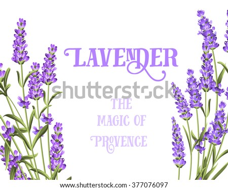 The lavender elegant card. - stock vector