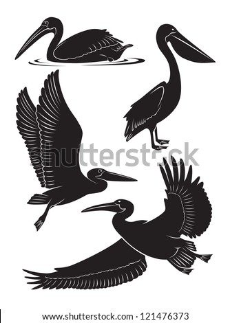 The picture shows a pelican - stock vector
