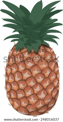 the pineapple - stock vector
