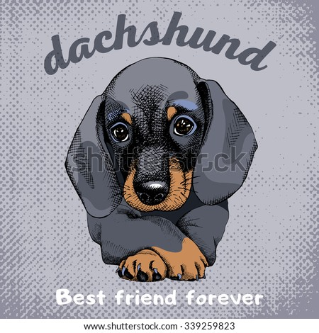 The poster with the portrait of the dog Dachshund. Vector illustration. - stock vector