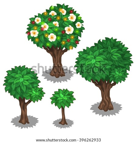 The stage of growth and development of a flowering fruit tree. Landscaping, plants and gardens. Vector illustration.  - stock vector