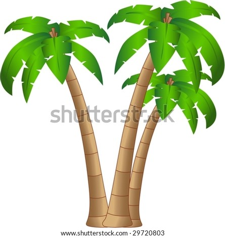 the vector tropical tree isolated on white background eps 8 - stock vector