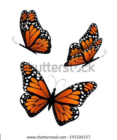 Three butterflies in orange tones. Vector - stock vector