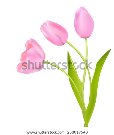 three gentle pink tulips on white - stock vector