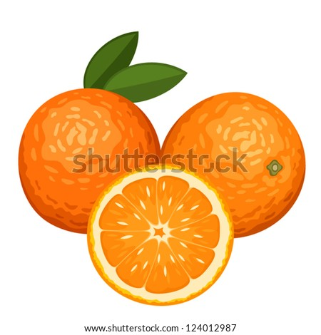 Three oranges isolated on white. Vector illustration. - stock vector