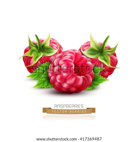 three vector berry raspberry with green leaves isolated on white background - stock vector