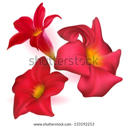 Three vector realistic red dipladenia flowers - stock vector