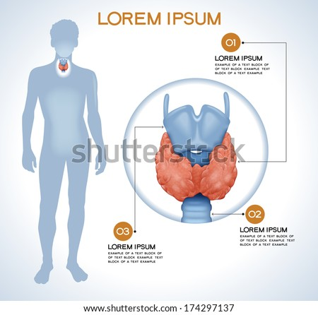 Thyroid. Modern medical infographics. Internal organs in a human body. Anatomy of people - stock vector