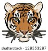 tiger illustration vector isolated on white background with black outline - stock vector