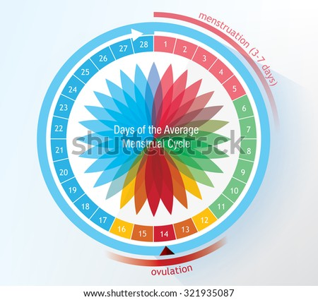 Timetable of a menstruation period showing ovulation - stock vector