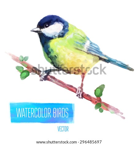 Tit watercolor  bird isolated on white background. Vector illustration - stock vector