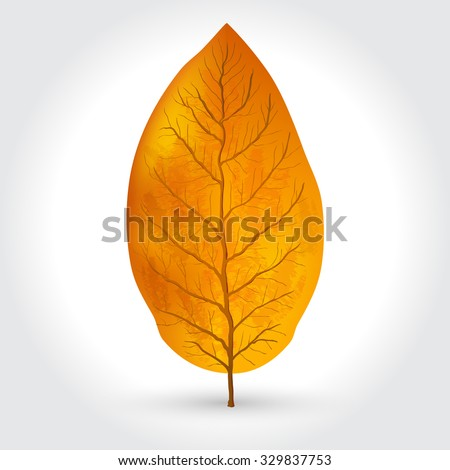 tobacco leaves vector illustration - stock vector