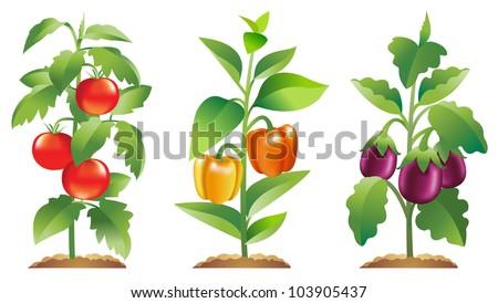 Tomato Plant Silhouette Tomato Plant Bell Pepper