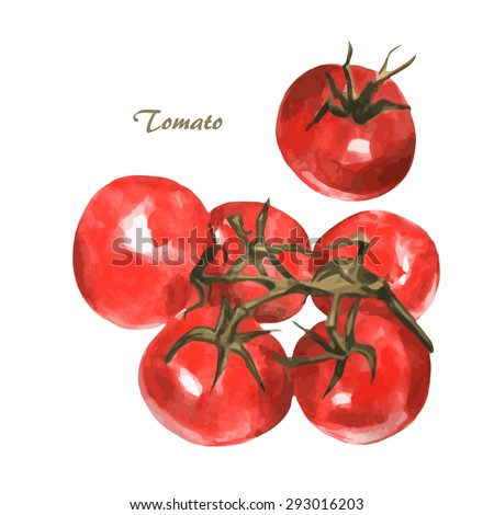 Tomato set. Hand drawn watercolor painting on white background. Vector illustration - stock vector