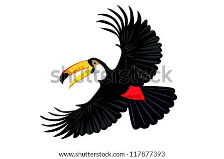 toucan parrot - stock vector