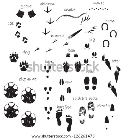 Traces of animals, birds, people - stock vector