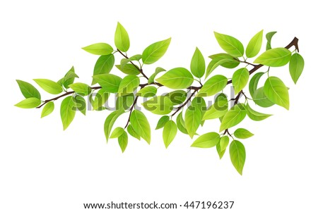 Tree branch with green leaves. Detailed vector plant, isolated on white background. - stock vector
