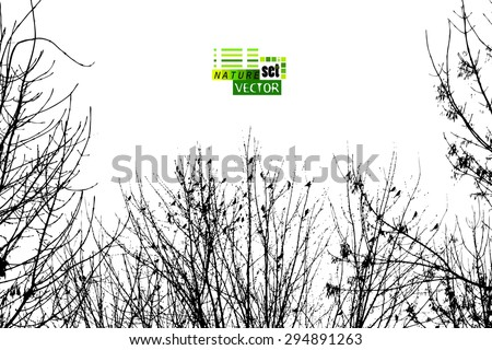 Tree branches background with birds. Vector - stock vector
