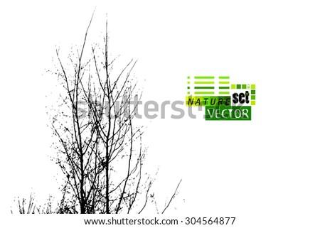 tree branches. Vector - stock vector