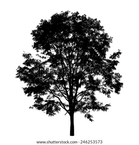 Tree isolated on white background - stock vector