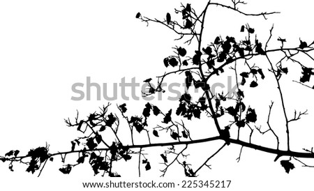 Tree twigs silhouette vector - stock vector