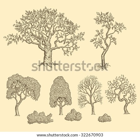 Trees. Design set. Hand drawn engraving. Vector vintage illustration. 8 EPS - stock vector