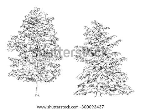Trees, Oak, birch, fir, pine. Sketch collection - stock vector