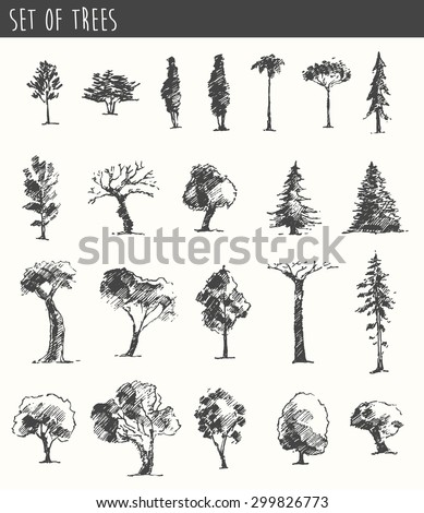 Trees sketch set, vintage illustration, engraved style, hand drawn - stock vector