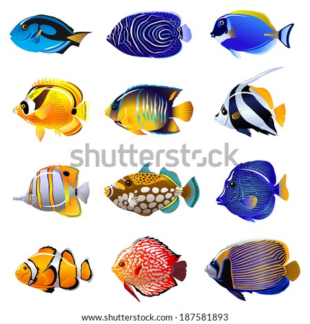 Saltwater stock photos images pictures shutterstock for How to make saltwater for fish