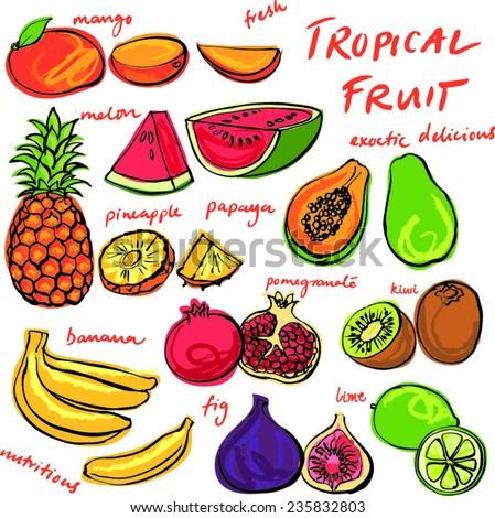 Tropical fruit set vector drawing - stock vector
