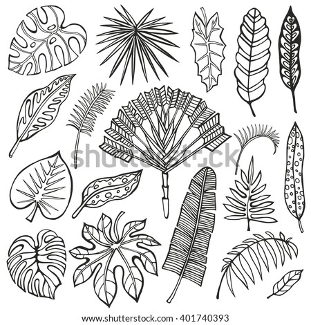 Tropical palm leaves set.Vector leaf,Silhouette.Tropical leaves.Isolated.Summer vector.Monster leaves.Tree branch.Exotic graphic,vacation illustration,tropic paradise collection.Summer,Hawaii,nature - stock vector
