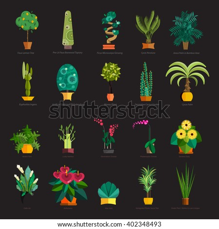 tropical plants set isolated vector illustration, summer   nature botany background design with leaf, home flower in pot, green potted palm tree, garden natural exotic tree decoration - stock vector