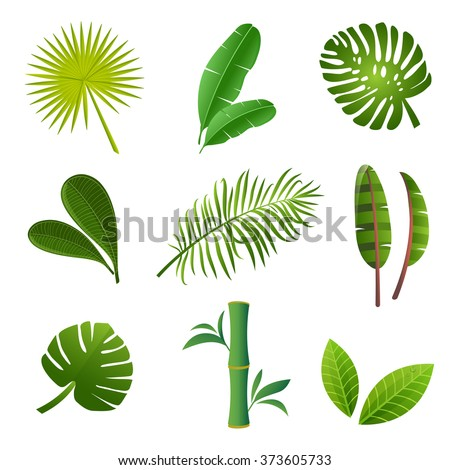 Tropical plants set. Vector illustration of green leaves of Strelitzia, banana, monstera, frangipani, bamboo and other tropical plants - stock vector