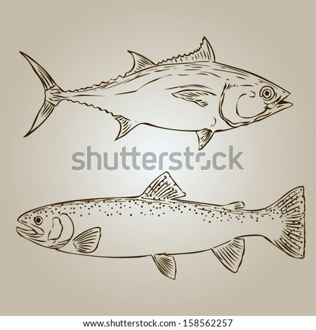 Trout and tuna. Hand drawn vintage vector illustration - stock vector