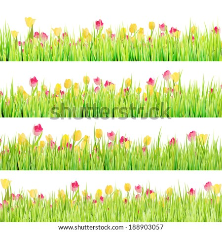 Tulips flowers in green grass isolated on white background. And also includes EPS 10 vector - stock vector