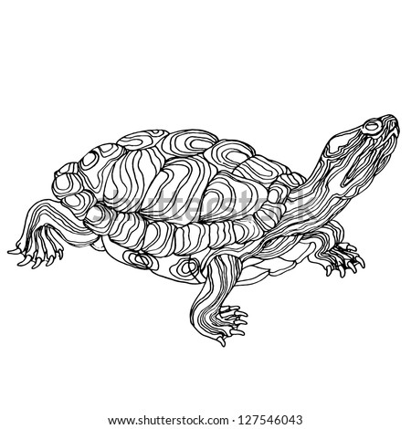 Turtle hand drawn. Vector illustration. Realistic sketch. - stock vector