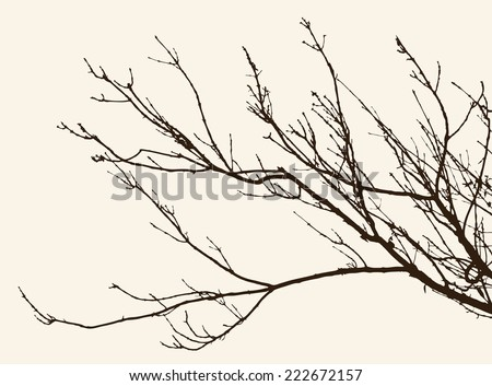 twigs - stock vector