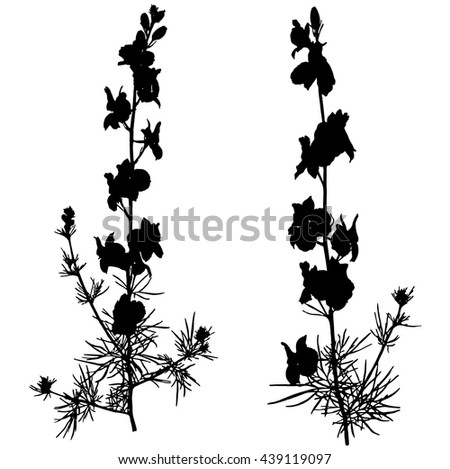 Two black silhouette of plants. Sprigs of wild flowers on a white background. Meadow bouquet. - stock vector