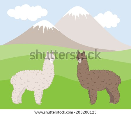 Two cute furry differently colored alpacas on a mountain meadow. Vector illustration. - stock vector