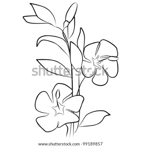 two flowers on branch - vector illustration - stock vector