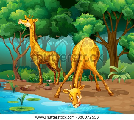 Two giraffes living in the forest illustration - stock vector