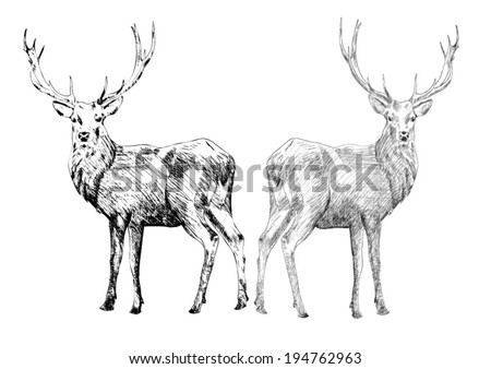 Two hand drawn deers. Vector Illustration. - stock vector