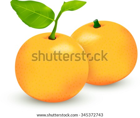 Two ripe tangerine fruits with green leaves.orange fruits,the leathery-leaved evergreen tree that bears the orange, native to warm regions of south and Southeast Asia - stock vector