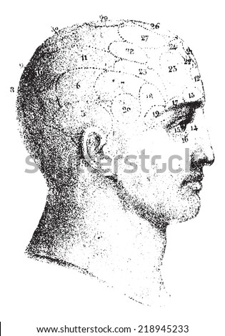 Type cranial given by Spurzheim in profile, vintage engraved illustration. Usual Medicine Dictionary - Paul Labarthe - 1885.  - stock vector